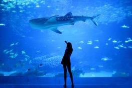 person standing in a aquarium watching fish